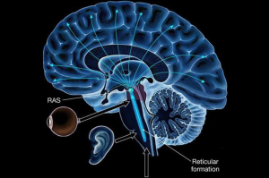 Neurological  Science Reticular Activating System & Triggers